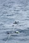 Click to see details of Snorkellers watching dwarf minke whales