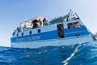 Click to see details of Minke whale watching dive boat