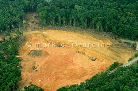 Rainforest clearance
