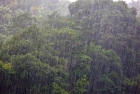 Click to see details of Heavy tropical rainstorm - jungle