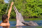 Click to see details of Amazon river dolphin, pink river dolphin or boto (Inia geoffrens