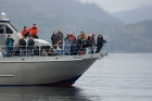 Click to see details of Whale watching