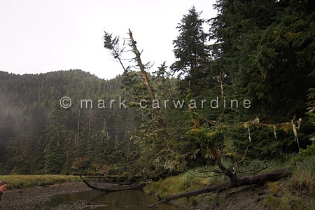Cameron Cove, Princess Royal Island, British Columbia, western C
