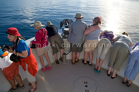 Dolphin-watching in Baja California, Sea of Cortez