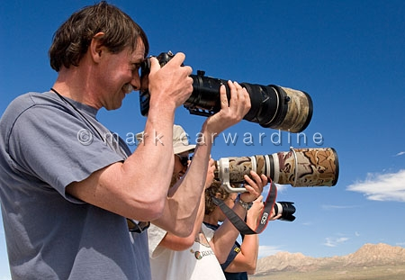 Wildlife photographers - wildlife photography