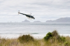 Click to see details of Helicopter leaving Codfish Island, South Island, New Zealand