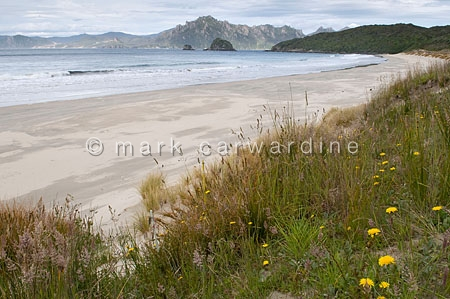 Codfish Island, South Island, New Zealand