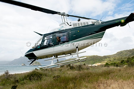 Helicopter leaving Codfish Island, South Island, New Zealand