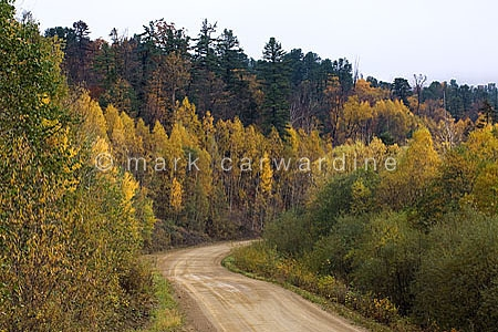 Logging Road in Taiga forest