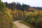 Click to see details of Logging Road in Taiga forest