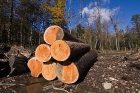 Click to see details of Illegal Logging