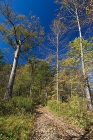 Click to see details of Taiga forest