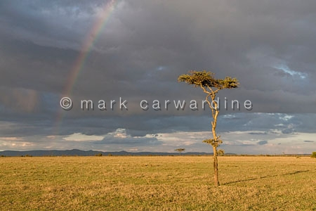 Rainbow at Ol Pejeta Conservancy, Kenya