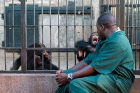 Click to see details of Keeper with rescued (orphaned) chimpanzees (Pan troglodytes)