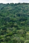 Click to see details of Rainforest or jungle in Bwindi Impenetrable Forest, Uganda