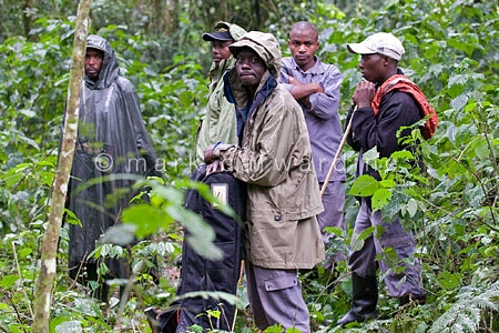Porters who accompany gorilla-watching tourists