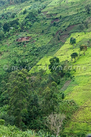 Farmland on the edge of Bwindi Impenetrable Forest, Uganda