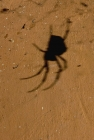 Click to see details of Shadow cast by spider on hut wall