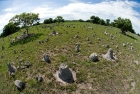 Click to see details of Termite mounds (Cubitermes sp)