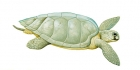 Click to see details of Olive ridley sea turtle (Lepidochelys olivacea)