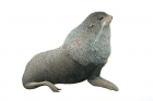 Click to see details of Northern fur seal (Callorhinus ursinus) male