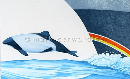 Commerson's dolphin (Cephalorhynchus commersonii) - bow riding