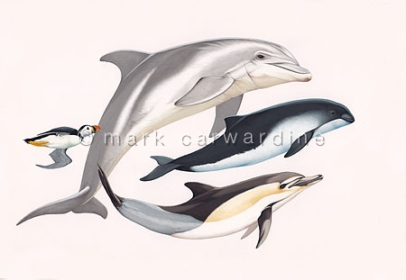 Puffin, bottlenose dolphin, harbor porpoise and common dolphin