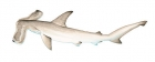 Click to see details of Winghead shark (Eusphyra blochii)