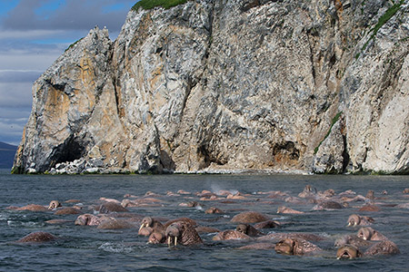 Wrangel Island Expedition Cruise
