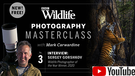Ep 3 of Mark's new YouTube channel on wildlife photography – click here for free fact sheets!
