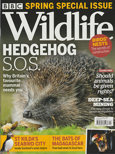 Read Mark's provocative and insightful conservation column in BBC Wildlife