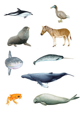Examples of wildlife illustrations available