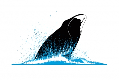 Image of Bowhead whale (Balaena mysticetus) - Breaching