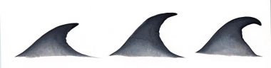 Image of Bryde's whale (Balaenoptera edeni) - Fin variation
