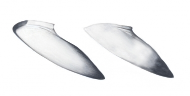 Image of Common minke whale (Balaenoptera acutorostrata) - Adult dwarf minke whale flippers (as yet an unnamed subspecies)