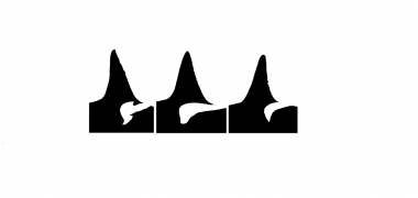 Image of Killer whale or orca (Orcinus orca) - Male dorsal fin and saddle patch comparisons; from left to right, resident, Bigg's, offshore