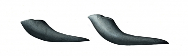 Image of Short-finned pilot whale (Globicephala macrorhynchus) - Flipper comparison, short-finned pilot whale (left), long-finned pilot whale (right)