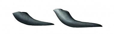 Image of Long-finned pilot whale (Globicephala melas) - Flipper comparison, short-finned pilot whale (left), long-finned pilot whale (right)