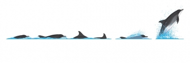 Image of Common bottlenose dolphin (Tursiops truncatus) - Dive sequence