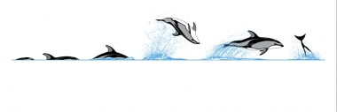 Image of Pacific White-Sided Dolphin (Lagenorhynchus obliquidens) - Dive sequence