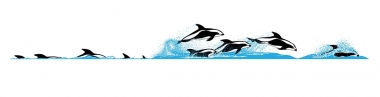 Image of Hourglass dolphin (Lagenorhynchus cruciger) - Dive sequence