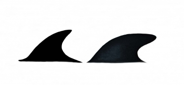 Image of Hourglass dolphin (Lagenorhynchus cruciger) - Dorsal fins (female left, male right)
