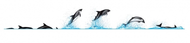 Image of Peale's dolphin (Lagenorhynchus australis) - Dive sequence