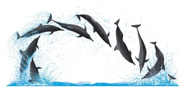 Image of Spinner dolphin (Stenella  longirostris) - Dive sequence