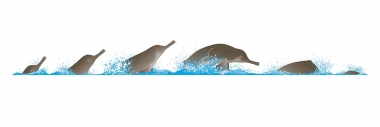Image of South Asian river dolphin (Platanista gangetica) - Dive sequence